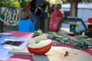 Apfelfest im Lindenpark